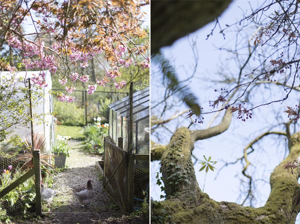 boturich castle garden details