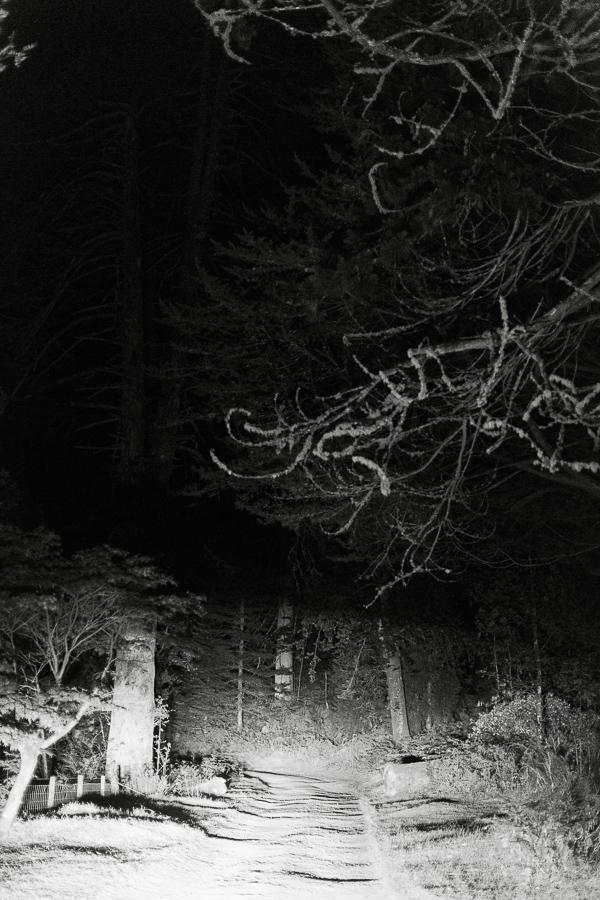 dark forest scotland