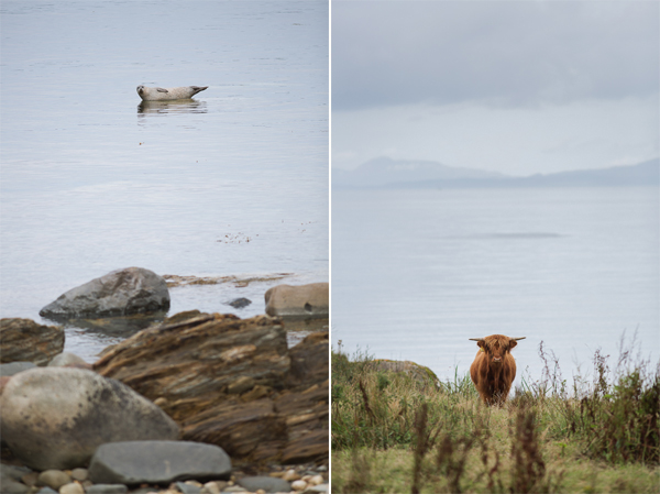 seal and highland cow near crear wedding venue