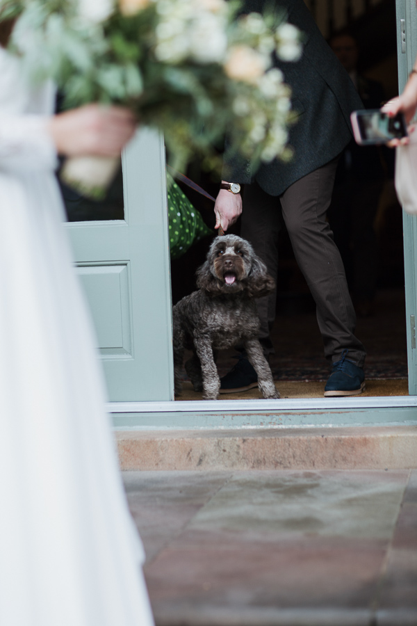 cockapoo at the wedding cromlix house