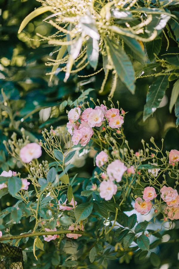 wild flowers loch lomond
