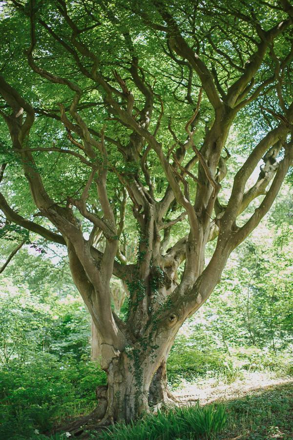 large tree at lochgreen gardens
