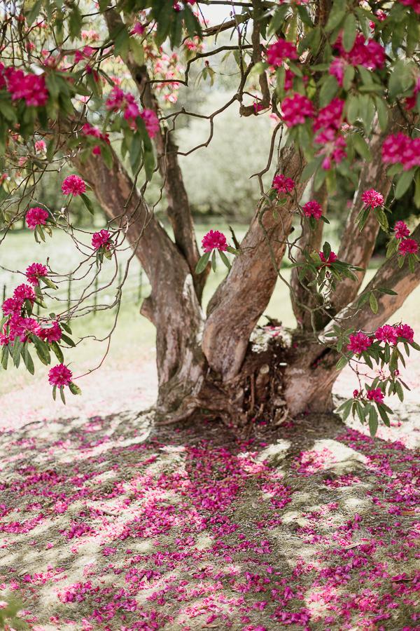 isle of bute tree