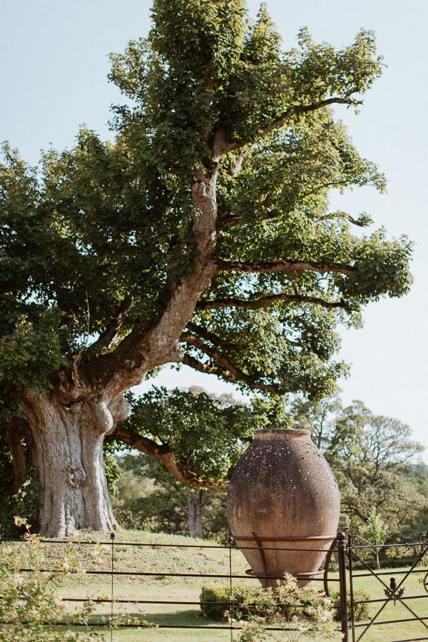 oak tree and giant vasein dumfries hosue garden