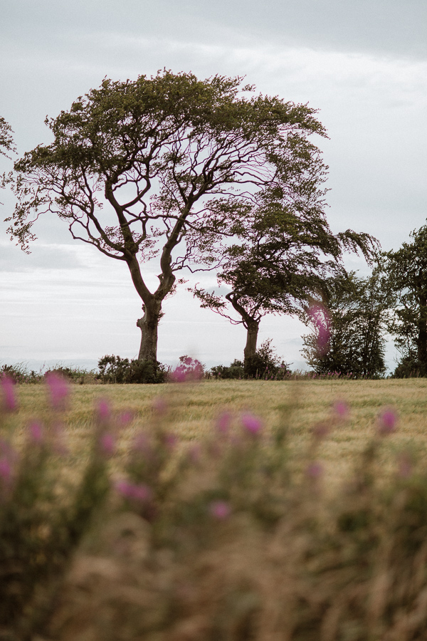 trees and flowers on the way to soarn castle