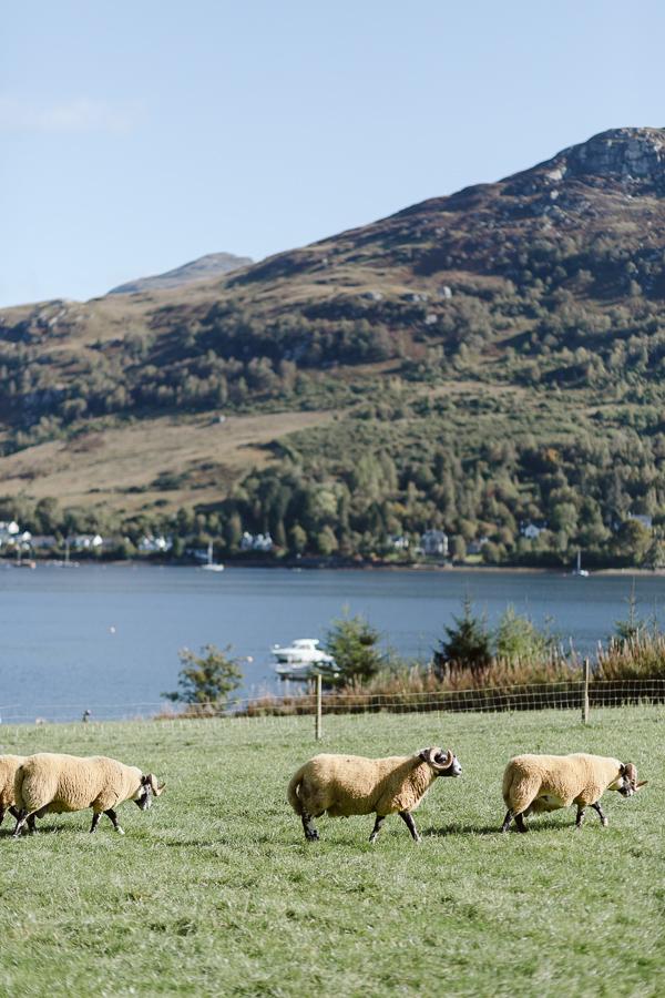 Wedding Photographers Glasgow The Lodge on Loch Goil 1