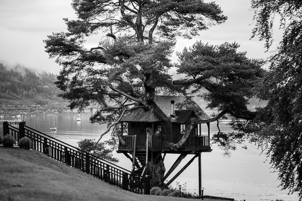black and white picture of the tree house